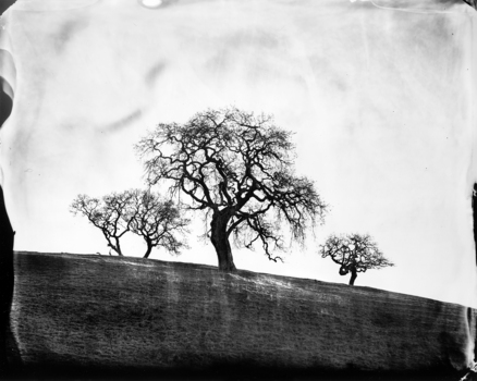 Oaks__west_marin_