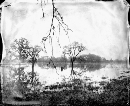 Flooded_oaks_
