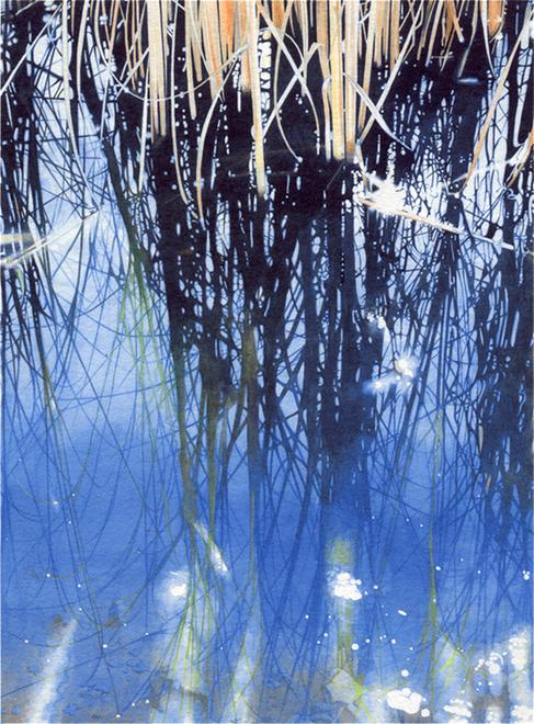 A_reeds