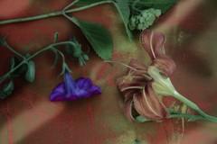 20100919113004-the_garden_arrangement