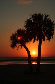 Img_2208_sunset_palms_lisa_nanakorn