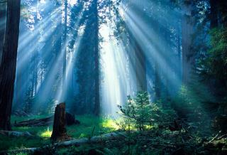 Lmartin_sequoiasmoke02_sm