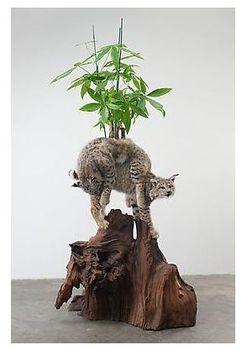 Dereks_plant