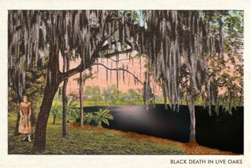 Black_death_in_live_oaks_sm