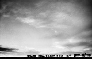 Jordahl-kate_treesatsunset