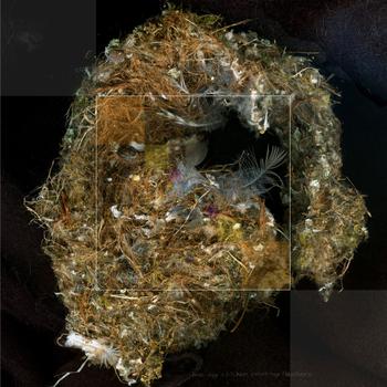 20100809061942-nest_2sm