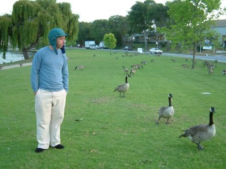 20100809190335-michael-ducks