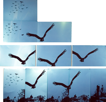 20100816101656-9-spotting_raptors_7