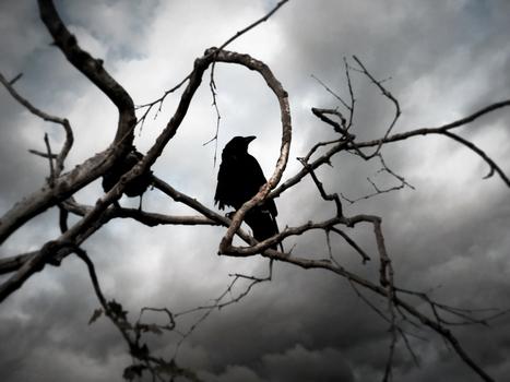20100823013646-crow_0_final_cut_i