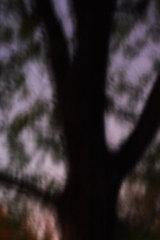 20100830091253-pr-dudis-tree_1