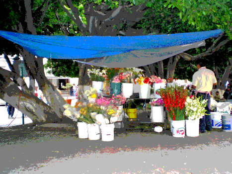20100907175639-_flowers_under_blue