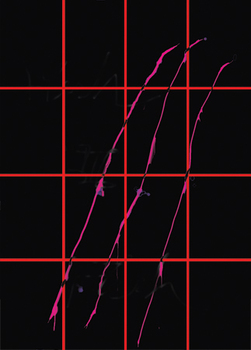 20100910150013-mzzeinladung