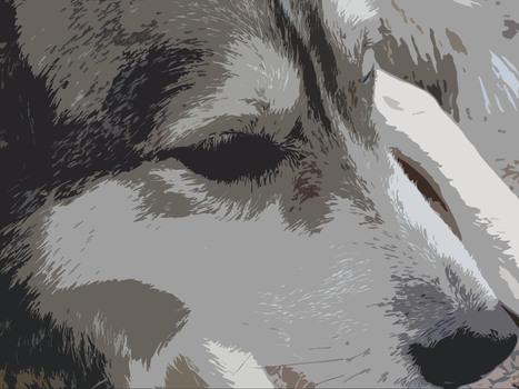 20100912184217-shepard-head-300dpi
