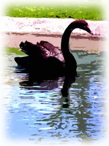 20100912185852-black_swan-painting-pb-300