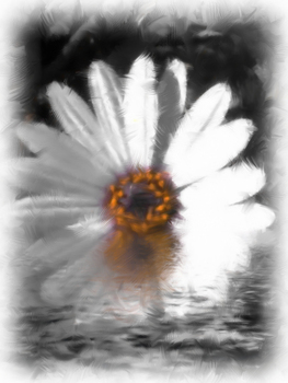 20100912212357-daisy_in_the_water_pbv2-300