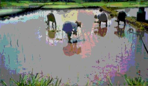 20120909223248-indonesa_rice_pattie-2v