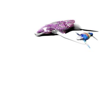 20100913094324-david_teng_olsen_whale-detail_2