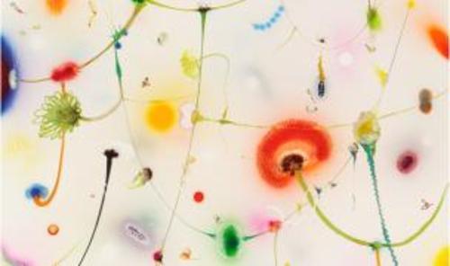 20100914004005-raingarden-1_-160-x-130cm_-2010