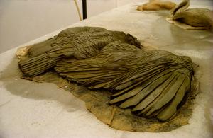 20100917021553-condor__birds___1999