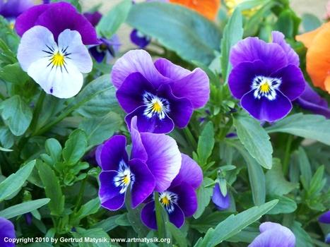 20100919114001-gertrud-matysik-photo-artmatysik-motive-flora-10-101-101_0015