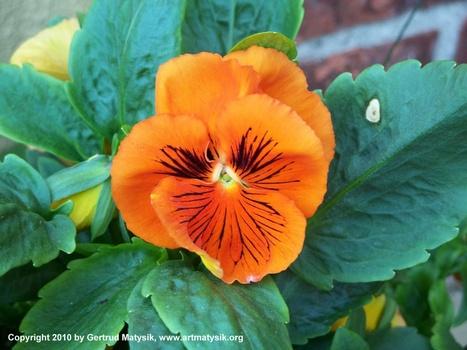 20100919114144-gertrud-matysik-photo-artmatysik-motive-flora-10-102-101_0028