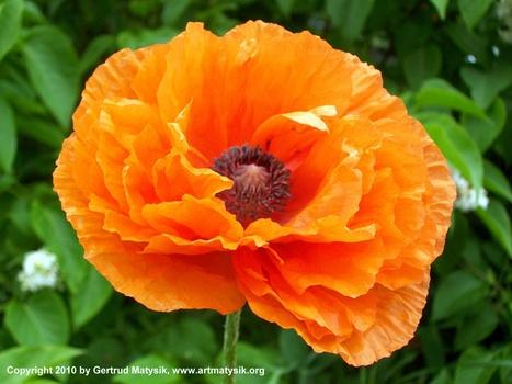 20100919114311-gertrud-matysik-photo-artmatysik-motive-flora-10-103-104_1021