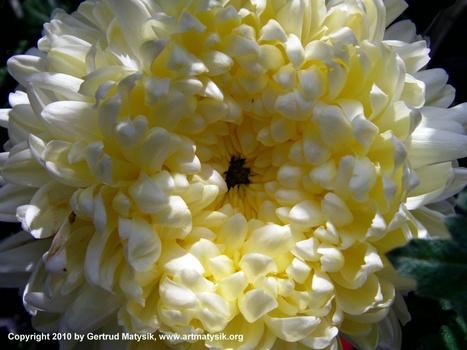 20100919114600-gertrud-matysik-photo-artmatysik-motive-flora-10-105-imag0043