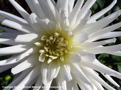 20100919114917-gertrud-matysik-photo-artmatysik-motive-flora-10-106-imag0085