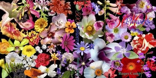 Flowers_p