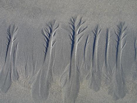 20101003094732-sand_trees1