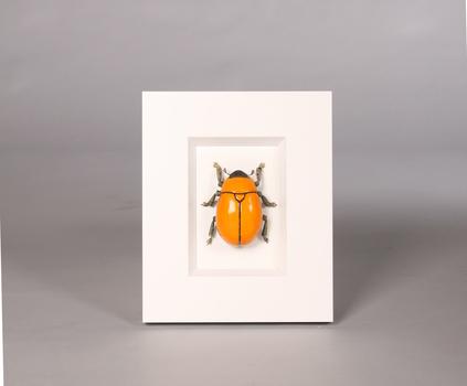 20101006071738-orange1