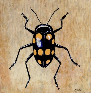 20101006072102-fungus_beetle