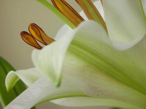 20101008103058-urban_bouquet