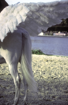 _angel_wing__tuilleries__paris
