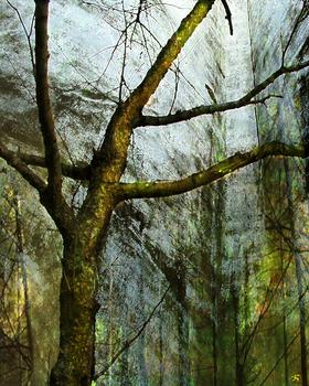 20101009193635-moss_on_tree_artslant