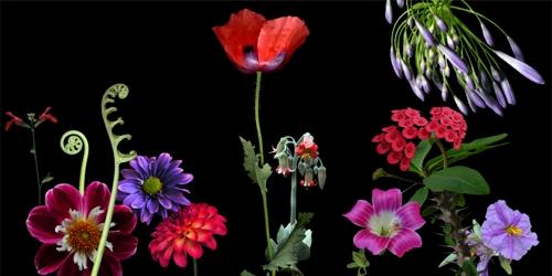 Flower_p