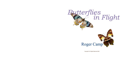 Butterflies_in_flight_1
