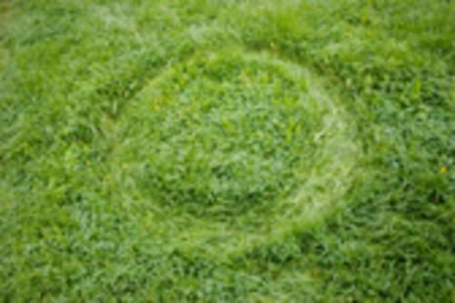 20101102113218-circulo_4