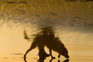 20101102132832-socalportrait--dogbeach1