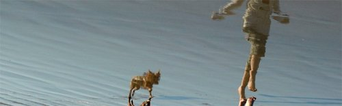 20101102132910-socalportrait-dogbeach2