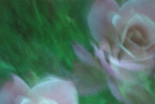 20101103193821-dsc_0141_1resized