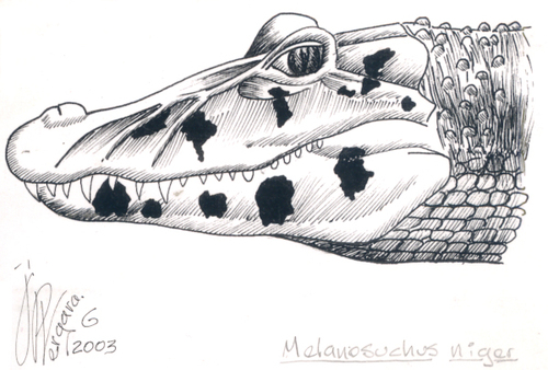 20101106101139-4_melanosuchus_niger_jp
