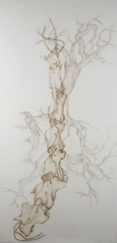 20101109102313-giraffe_cervical_vine__2010__72_22x36_22_colored_pencil_on_duralar