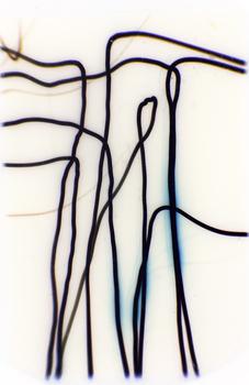 20101110015521-walkingsticks1990