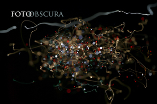 20101110090230-fotoobscura