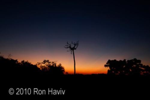 20101119140308-ron_haviv_brazil_nut_tree_txt