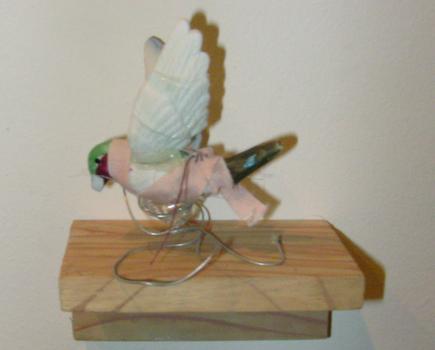 20101128231402-bird6