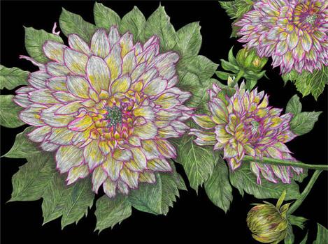 20101129183920-72_dahlia_flowers