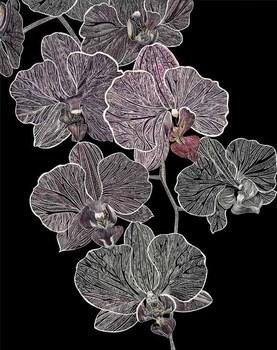 20101130044536-72_full_orchid