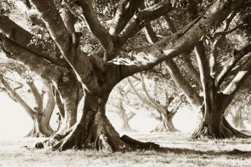 20140131151604-redler_-_banyan_trees